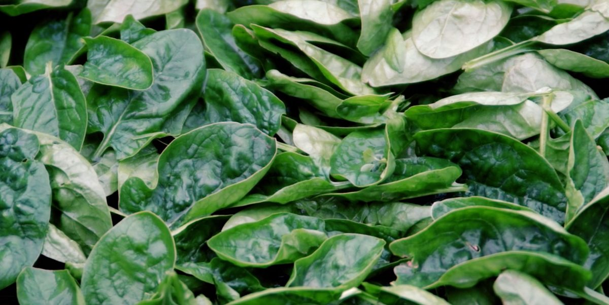 close up of spinach of whole foods video